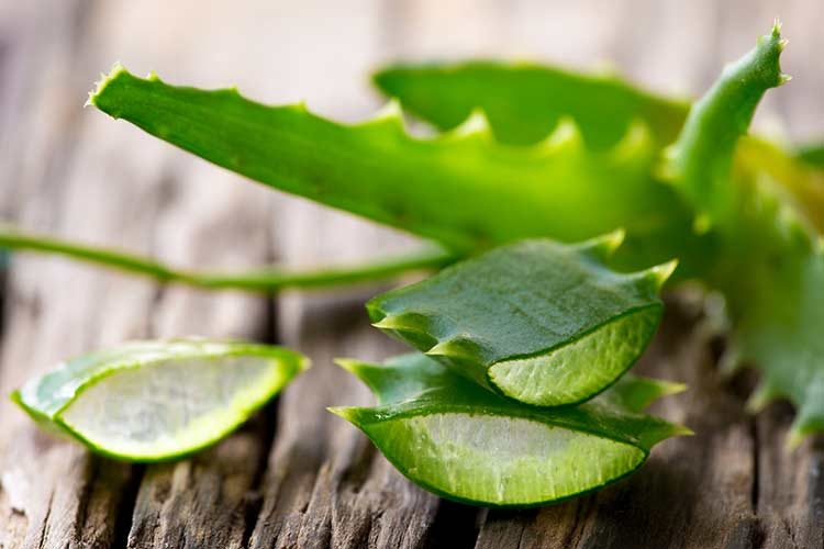 استفاده از آلوئه ورا برای درمان جوش ، خارش و کهیر پوست بعد از زایمان