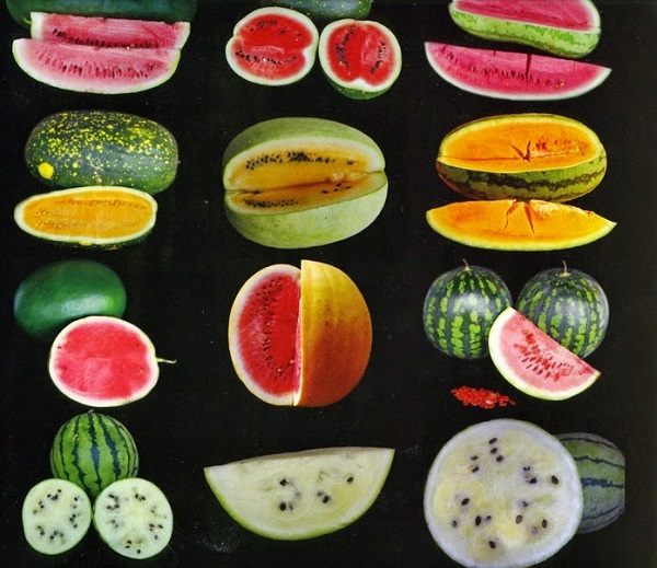 انواع مختلف هندوانه