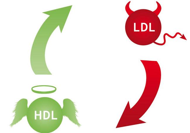 HDL چیست؟