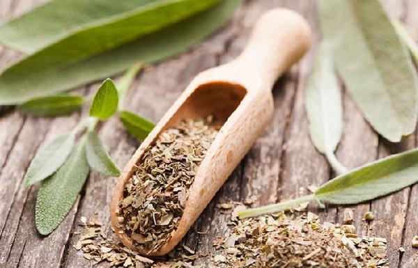 مریم گلی - درمان گیاهی موکوسل با طب سنتی