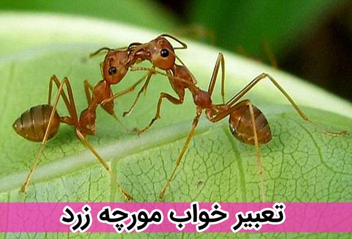 دیدن مورچه زرد در خواب