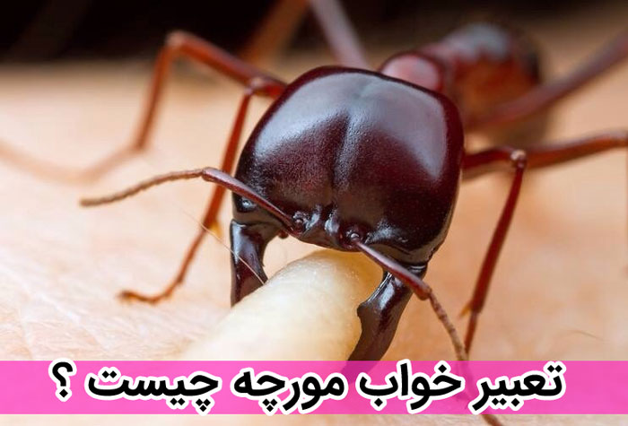 تعبیر خواب مورچه چیست ؟