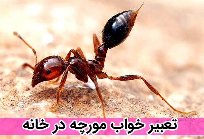 تعبیر خواب های قدیمی درباره دیدن مورچه در خواب