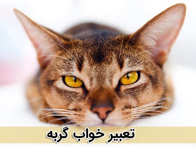 تعبیر خواب گربه - تعبیر خواب متفاوت - دیدن گربه در خواب چه معنی دارد ؟