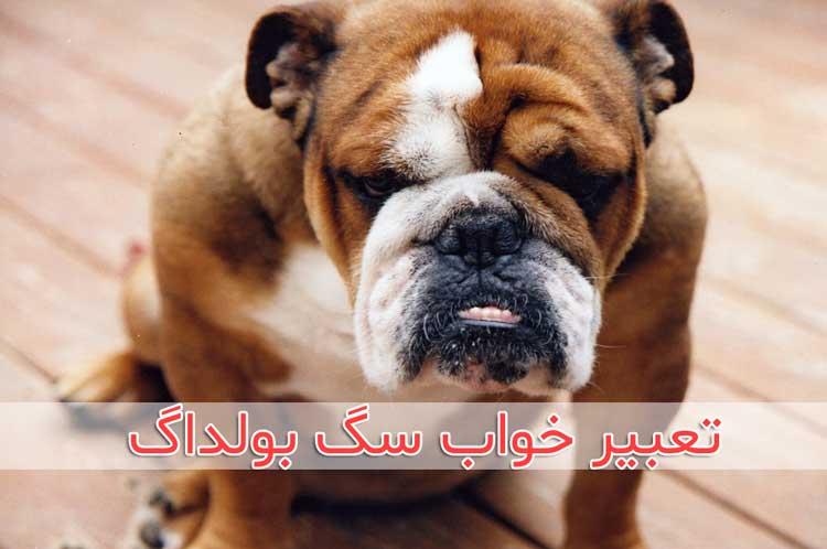 تعبیر خواب سگ بولداگ