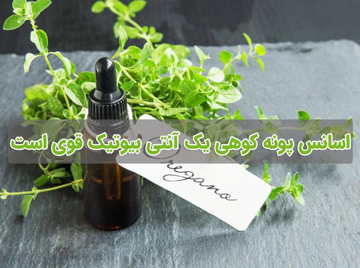 پونه کوهی التهاب عمومی بدن را کاهش می دهد