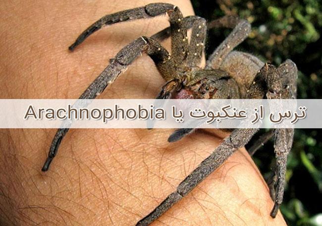 ترس از عنکبوت یا Arachnophobia