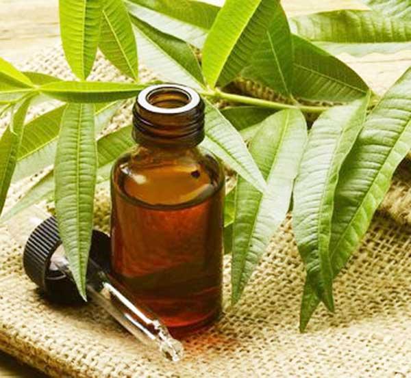 طرز استفاده روغن درخت چای برای جوش