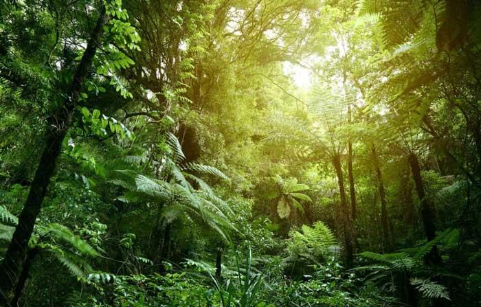 تعبیر خواب گم شدن در جنگل